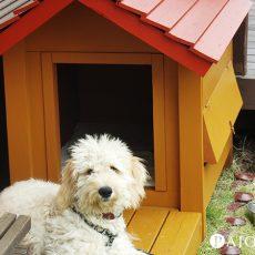 ワンちゃんも大喜び!色あせた犬小屋をまるで新品のようにDIYペイント